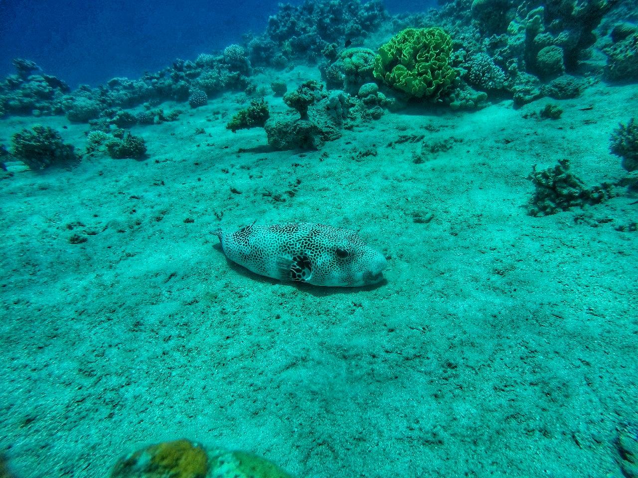 Jordanie - Plongée sous-marine dans la Mer rouge à Aqaba