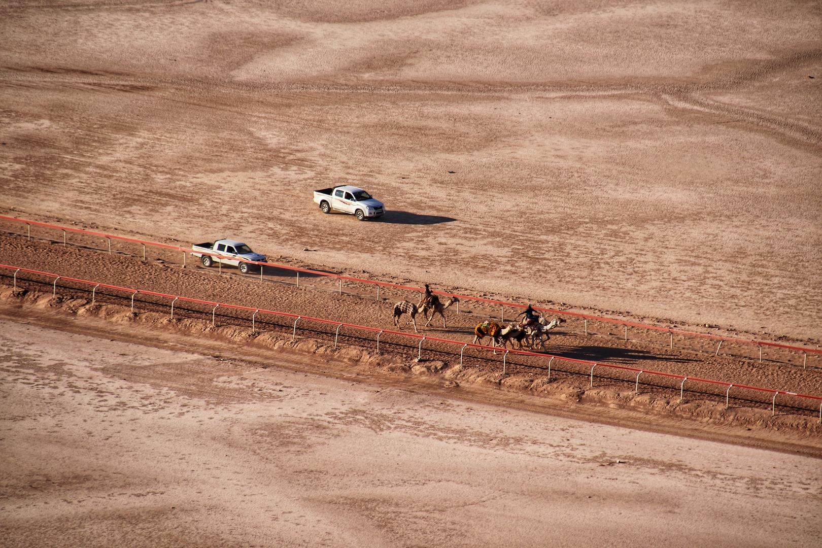 Jordanie - Bédouins entraînant leurs dromadaires sur le camélodrome dans le désert de Wadi Rum