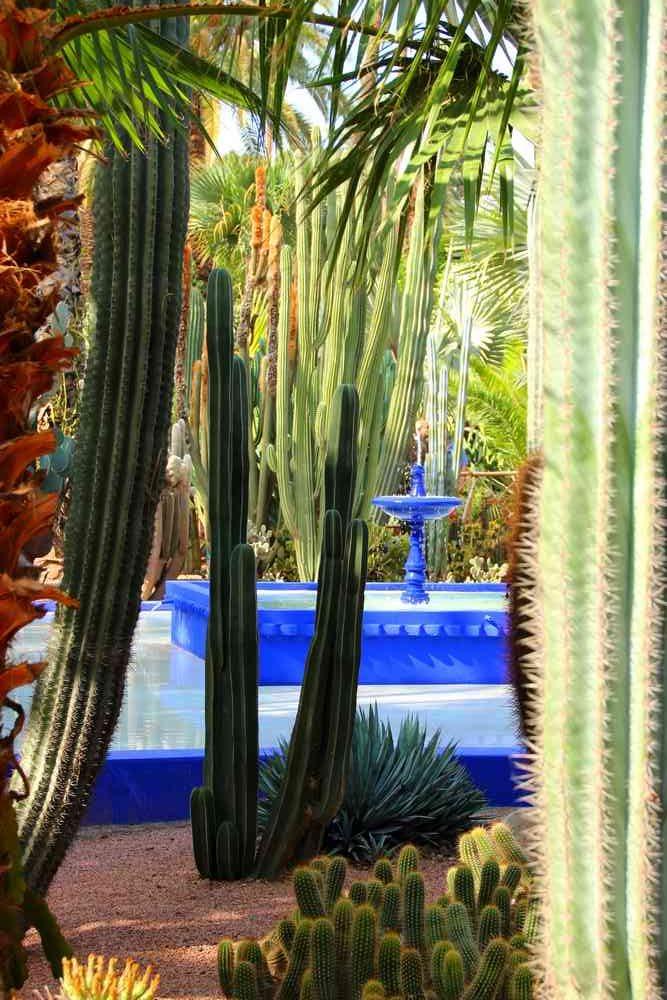 Maroc - Cactus et fontaine dans le jardin Majorelle à Marrakech