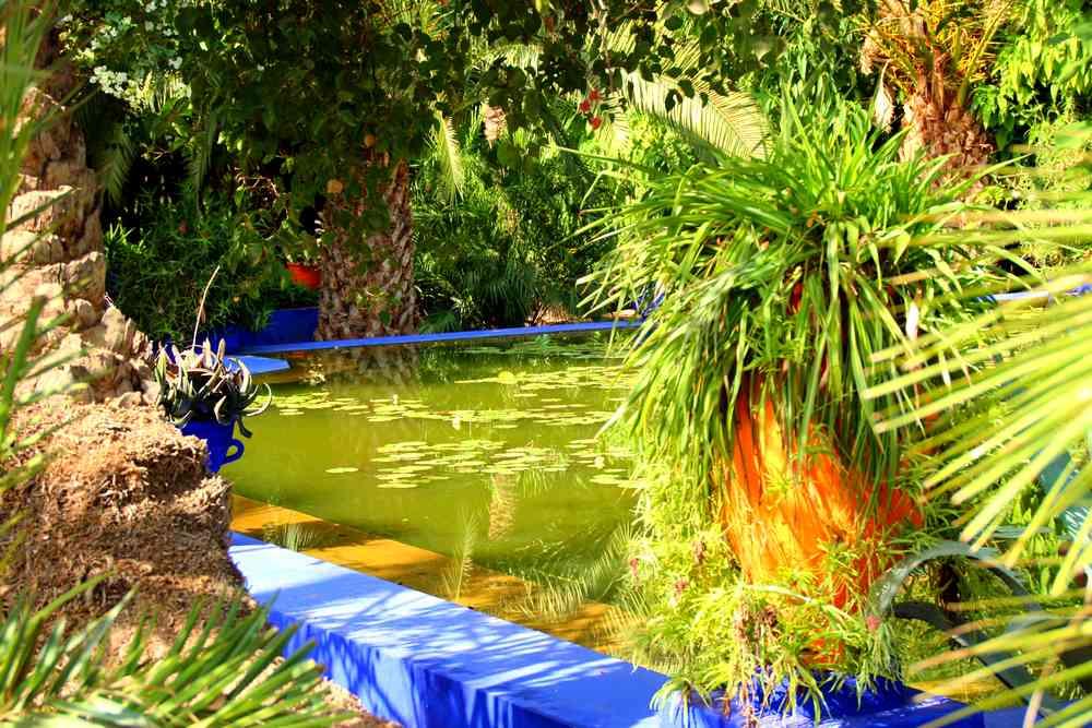 Maroc - Bassin d'eau dans le jardin Majorelle à Marrakech