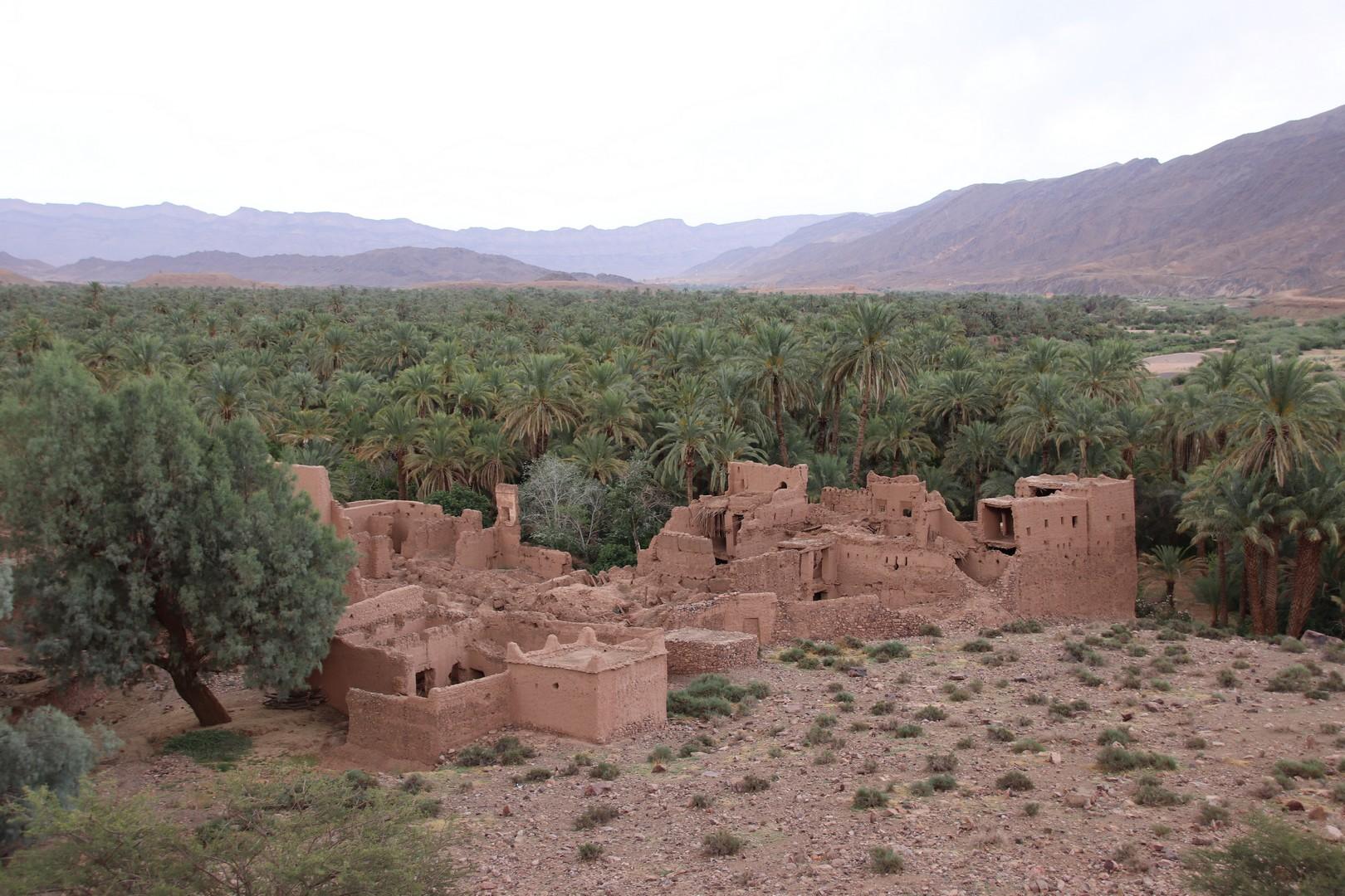 Maroc - Kasbah dans la palmeraie d'Agdz