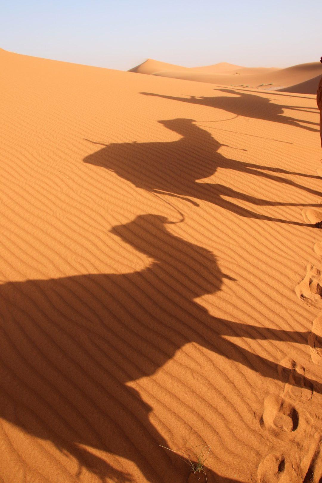 Maroc - Méharée à dos de dromadaire dans les dunes de Chegaga