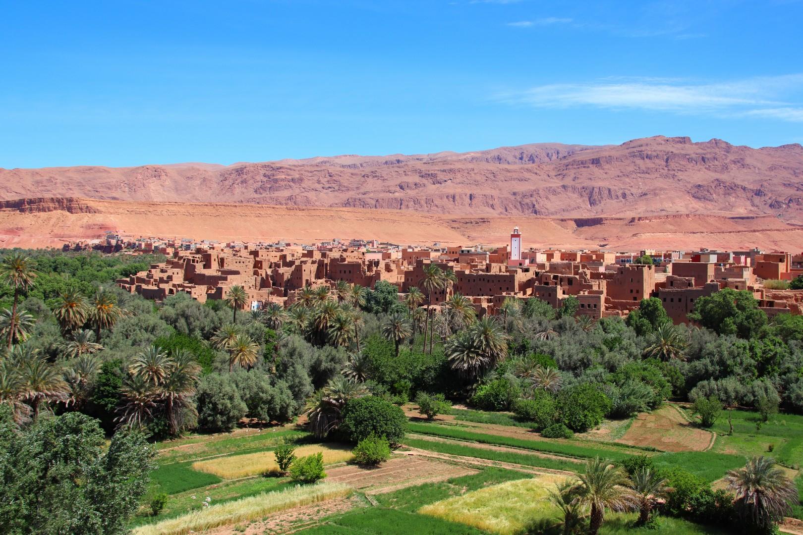 Maroc - Cultures dans la palmeraie de Tineghir