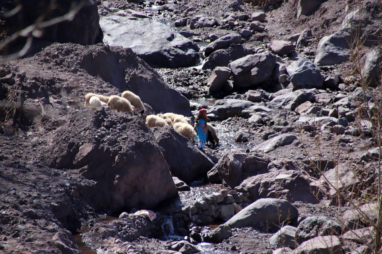Maroc - Bergère dans la vallée d'Imlil
