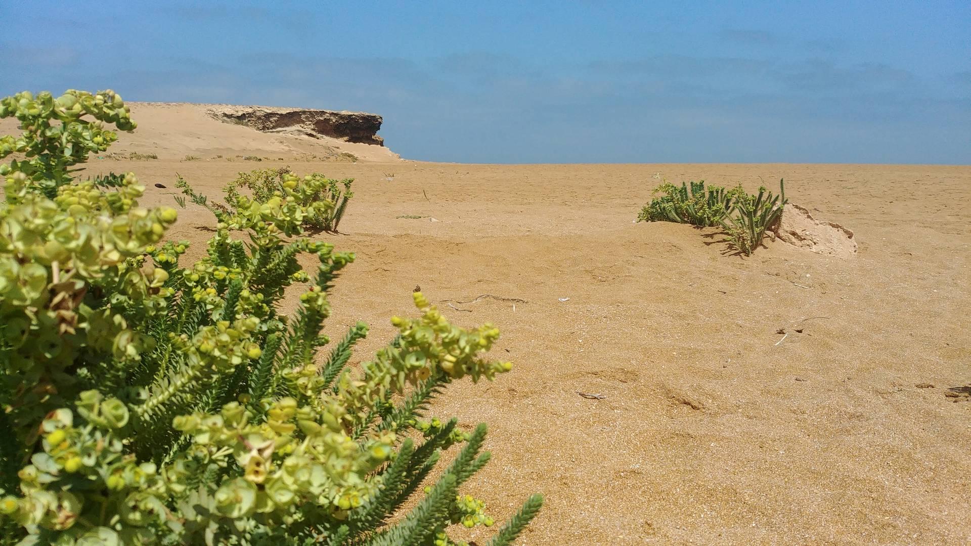 Maroc - Plage sauvage à côté de Oualidia