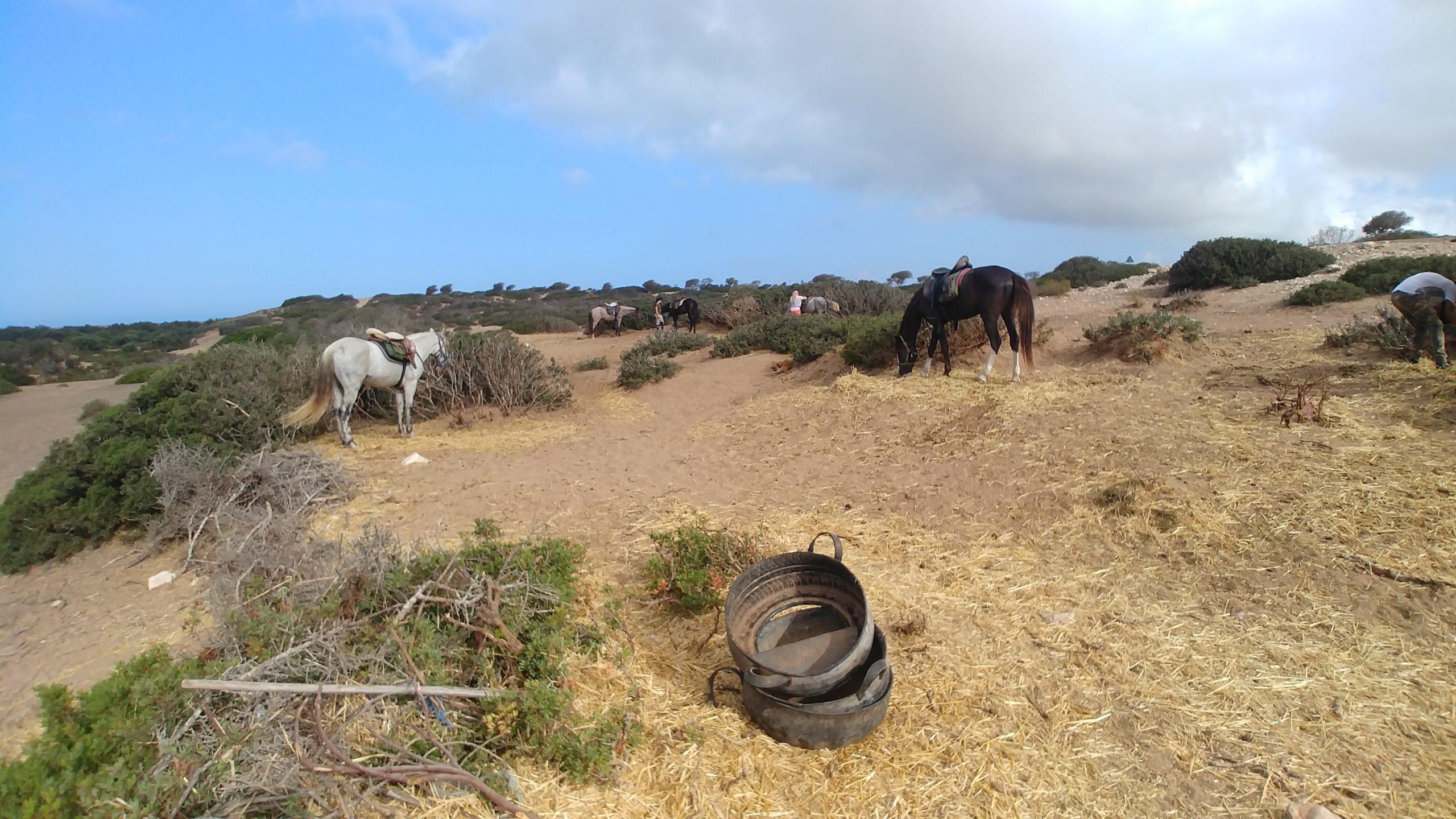 Maroc - Chevaux avant le départ en randonnée