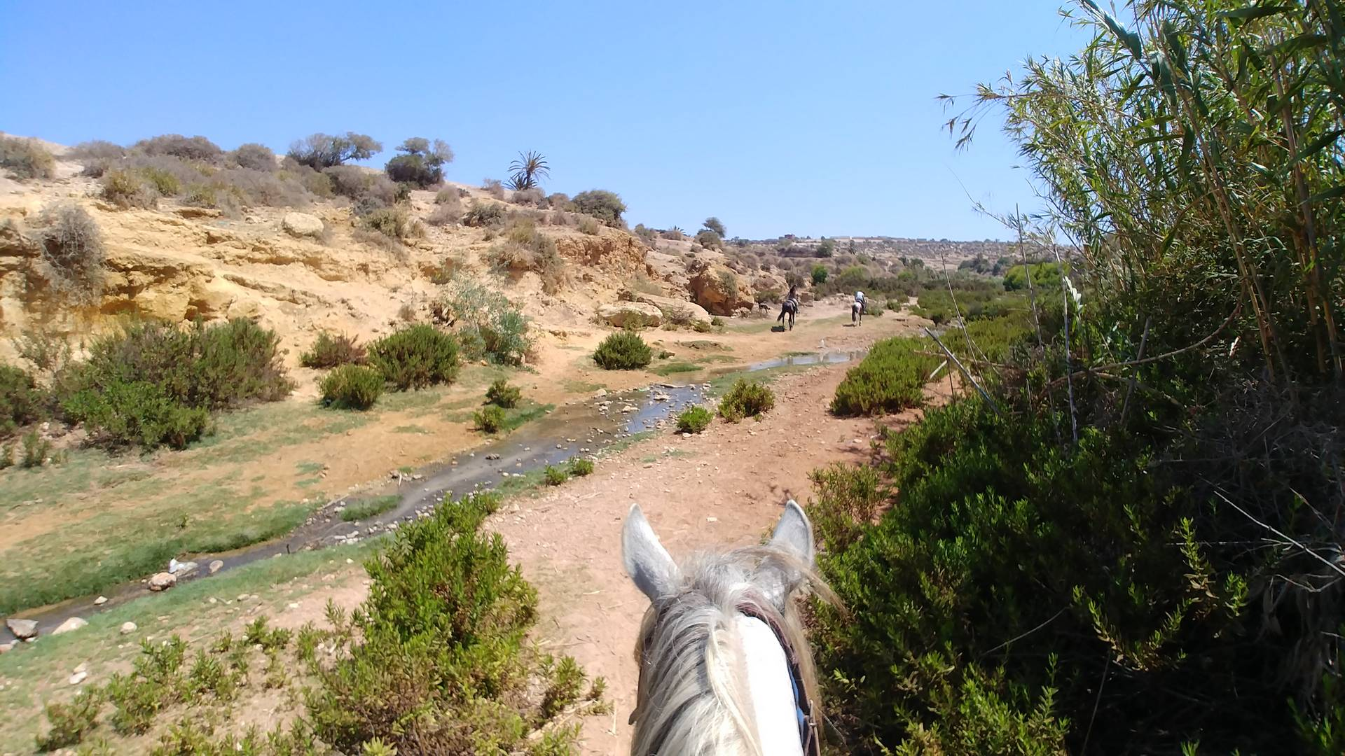 Maroc - Randonnée à cheval à Essaouira