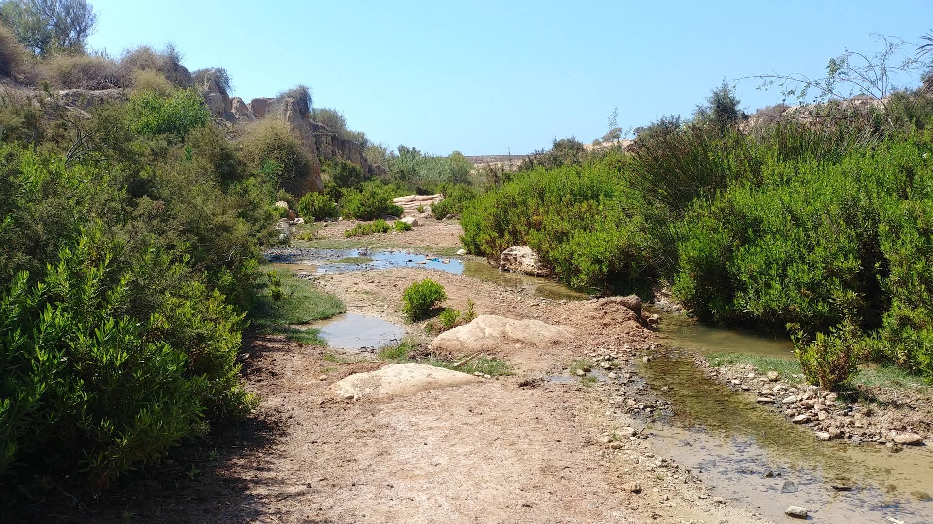 Maroc - Oasis, randonnée à cheval à Essaouira