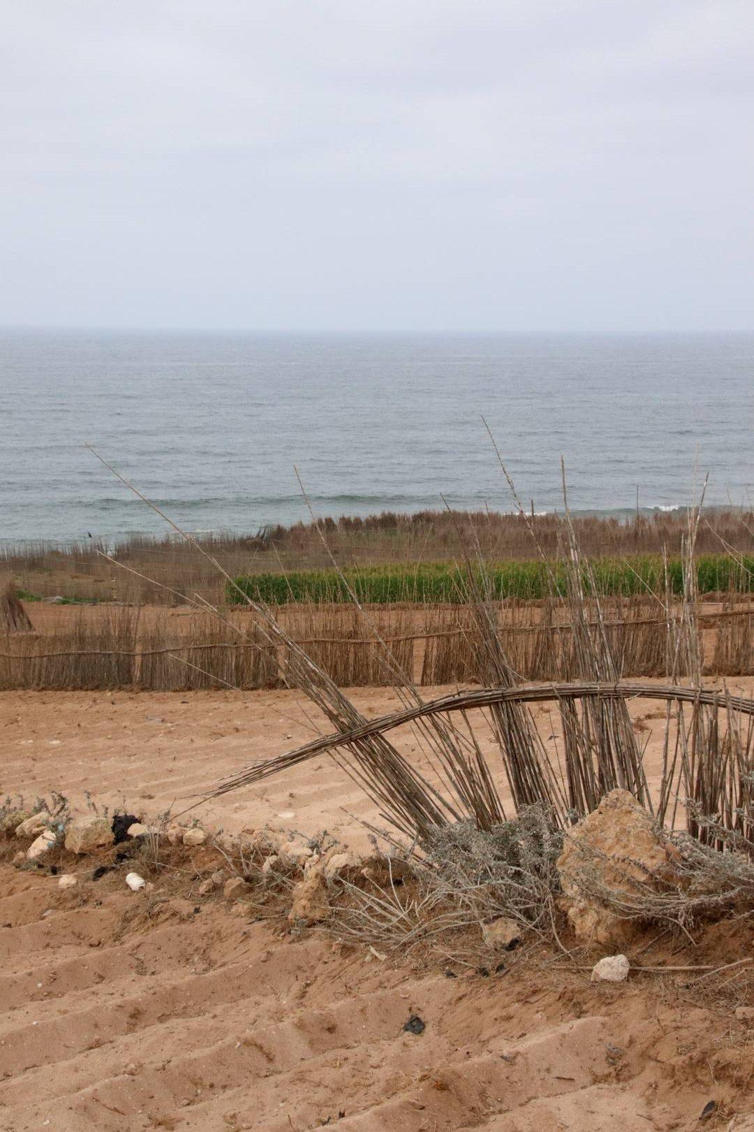Maroc - Cultures sur la côte atlantique à côté de Oualidia