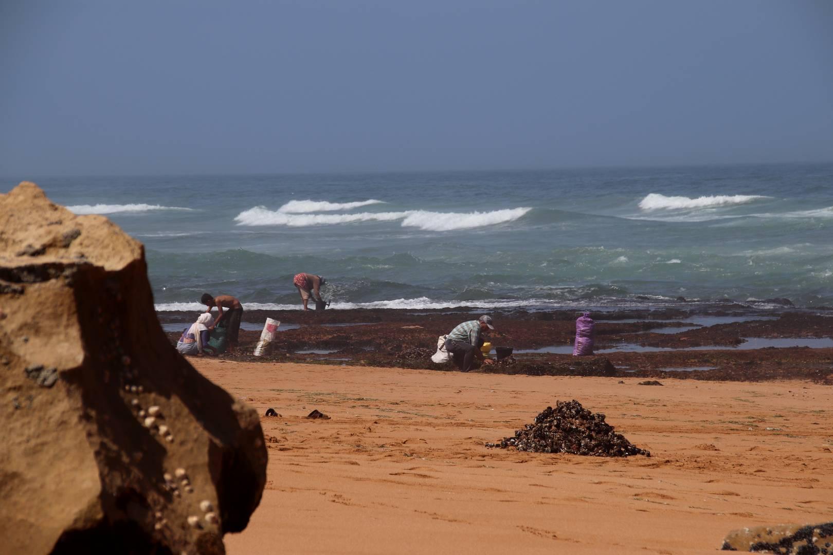 Maroc - Ramassage de moules sur une plage sauvage à côté de Oualidia