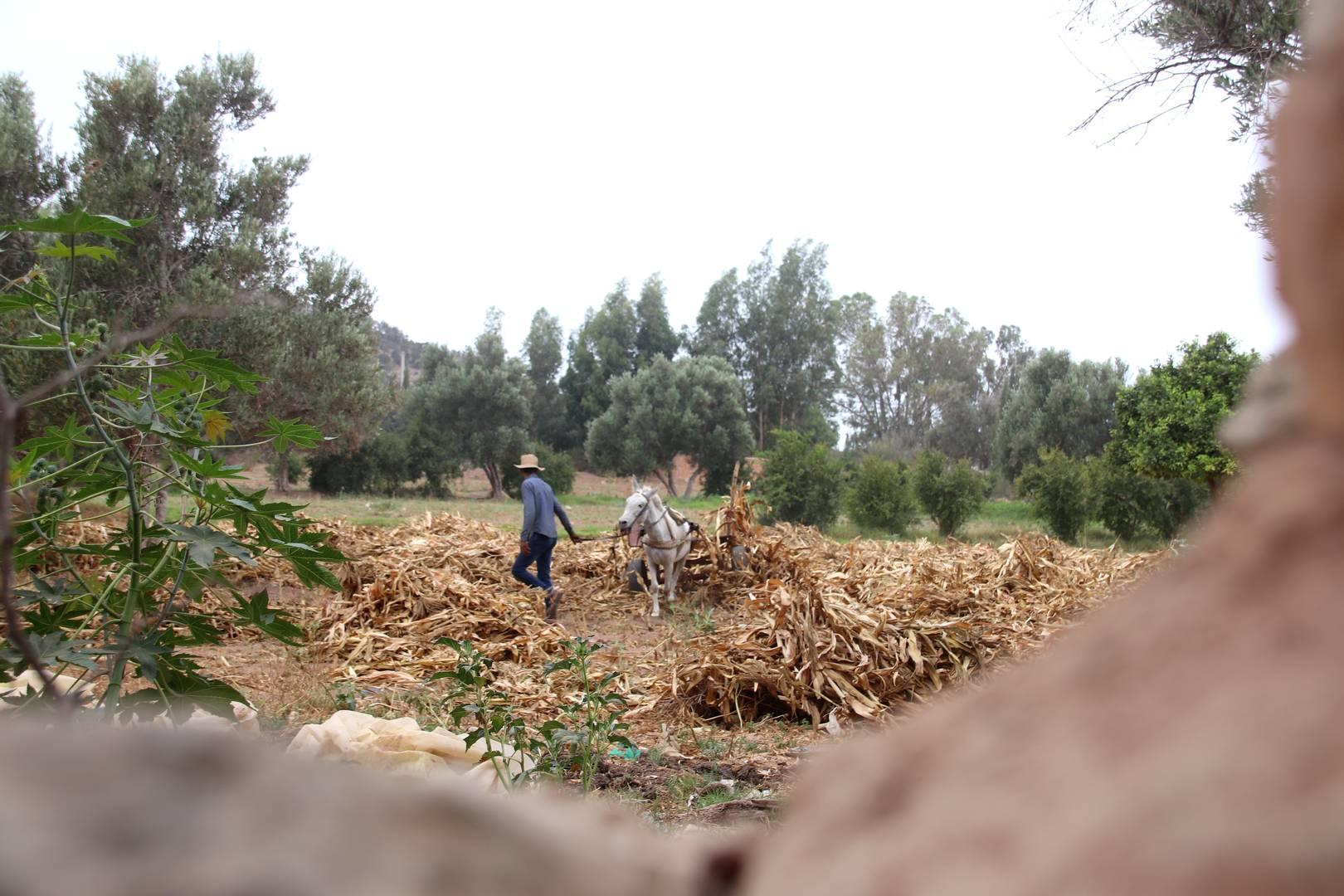 Maroc - Paysans dans l'oasis Ain Lahdjar à côté d'Essaouira