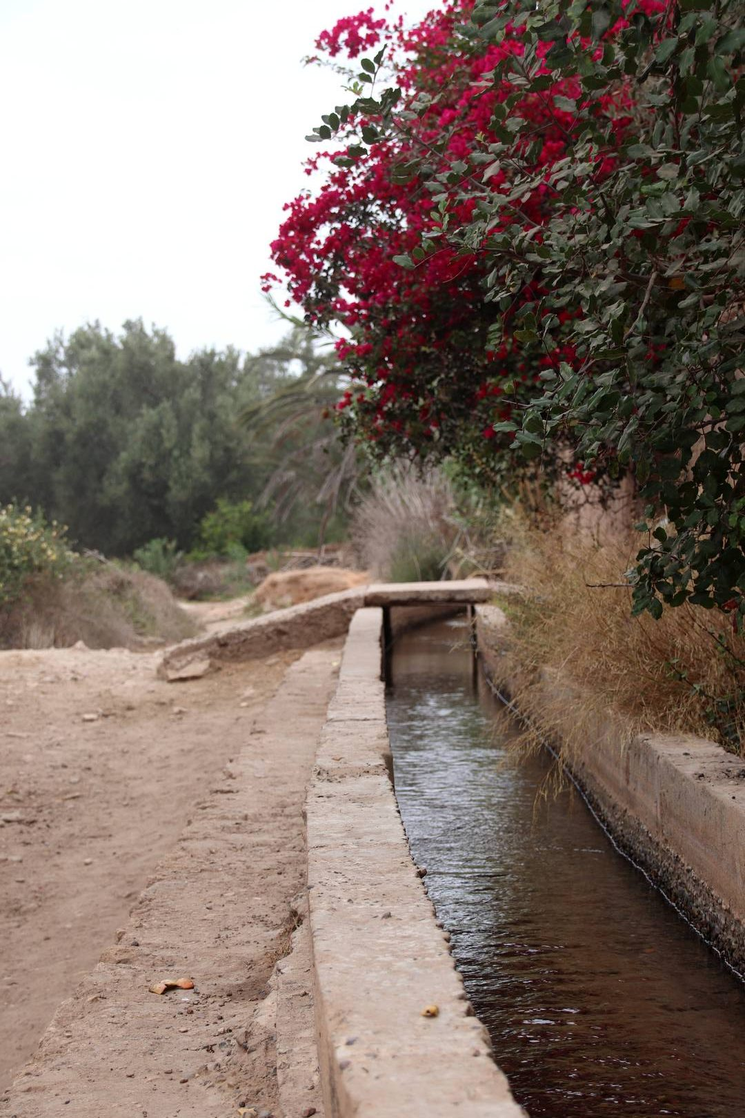 Maroc - Canal d'irrigation de l'oasis Ain Lahdjar à côté d'Essaouira