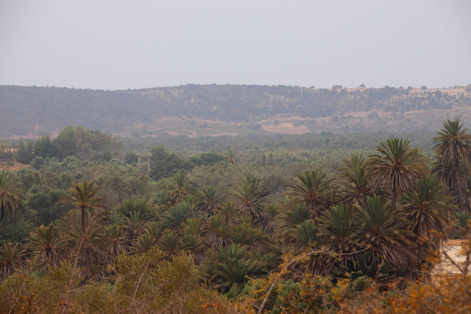 Maroc - L'oasis Ain Lahdjar à côté d'Essaouira